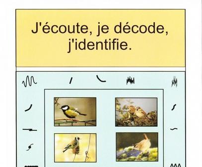 Balade Oiseau